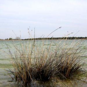 Foto El Romeral de la Laguna